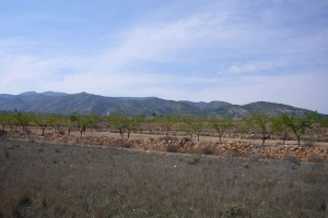 Land - Resale - Jumilla - Rural location