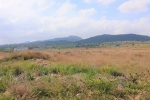Resale - Finca / Country Property - Monovar - Rural location