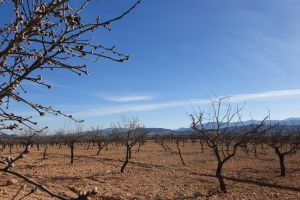Land - Resale - Pinoso - Rural location
